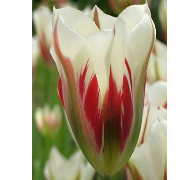 Flaming_Springgreen 鲜艳的春绿