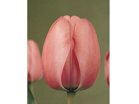 Pink Impression  粉色印象