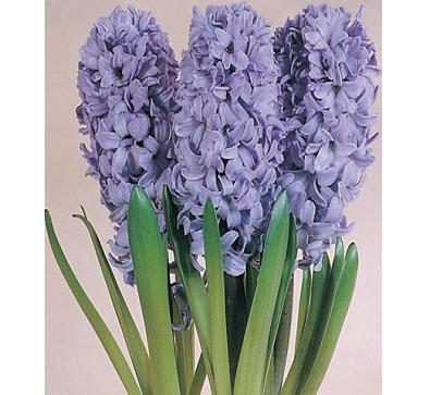 Delft Blue  代尔夫特蓝